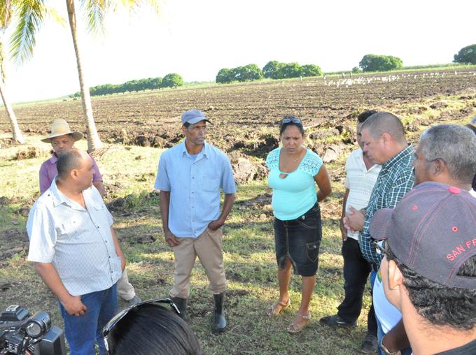 Producen grandes y apetitosos plátanos en El Cuchillo, Media Luna (+ audio)