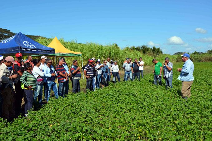 Validan nuevas  variedades de frijol en Granma