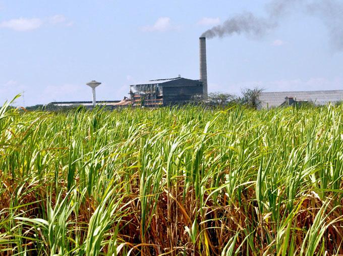 Muelen cuatro centrales azucareros en Granma
