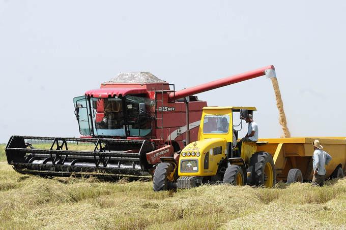 Redoblan esfuerzos para aumentar cosecha de arroz