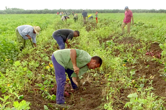 Benefician las lluvias actividad agropecuaria