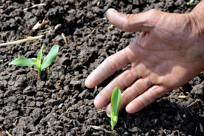 Expertos debaten en Cuba sobre agroecología y agricultura sostenible