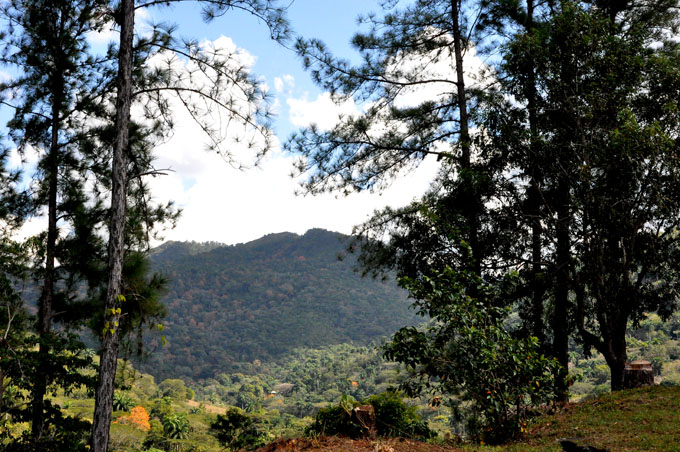 Recibe favorable impacto patrimonio forestal en Granma
