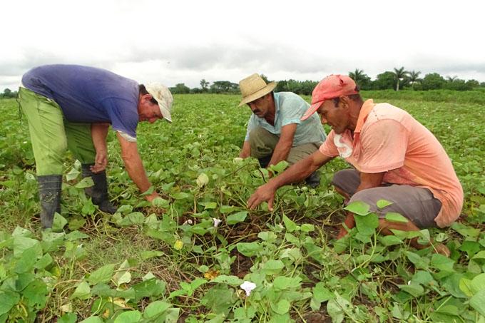 Empresa agropecuaria Granma con mejores resultados