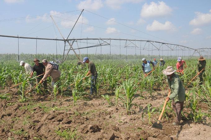 Reconocen avances en Empresa agropecuaria Jiguaní