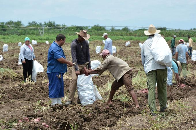 Aumentarán  rendimientos agrícolas en Jiguaní
