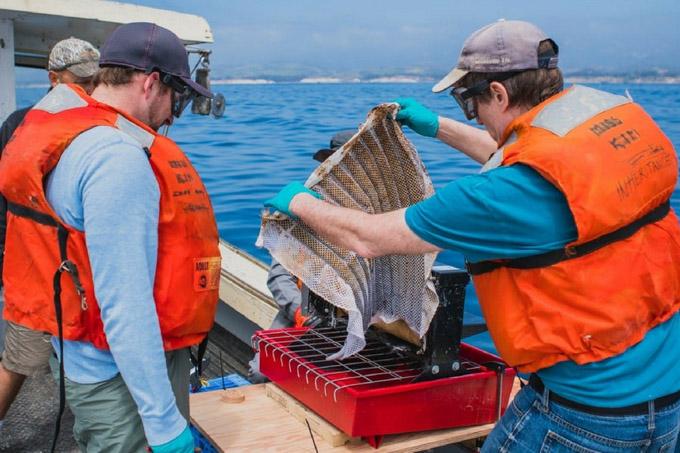 Crean esponja para limpiar vertidos de petróleo en el mar