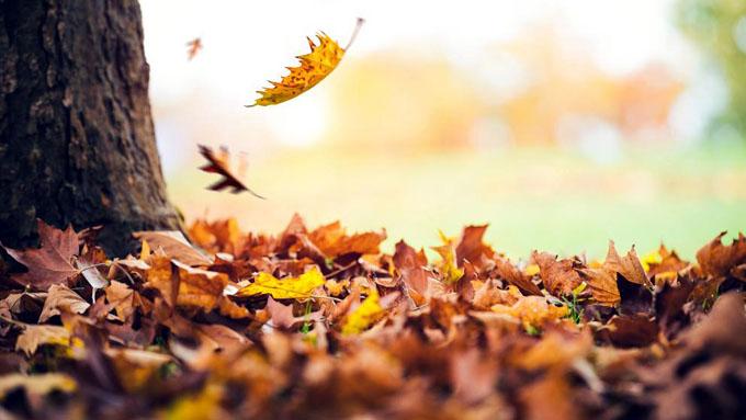 Confirman ocurrencia hoy de equinoccio de otoño (+ video)