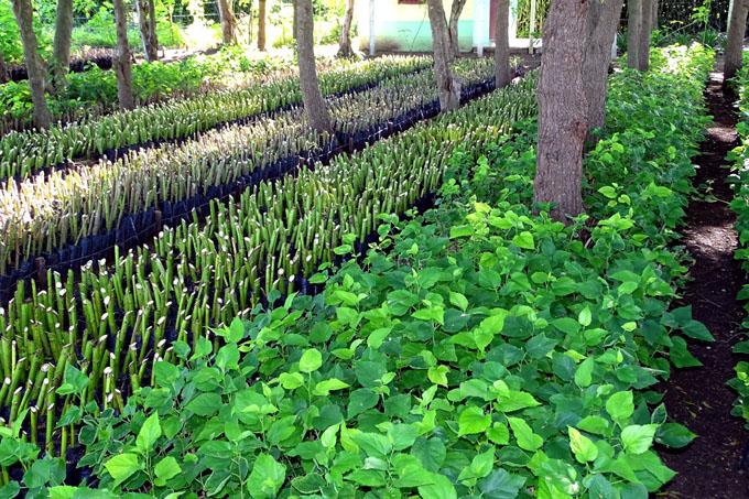 Busca Cuba revertir el proceso de degradación de sus suelos