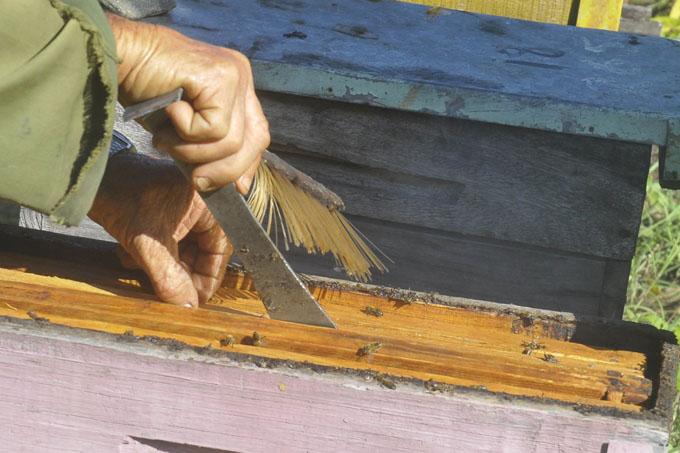 Granma mayor productora de miel  de abeja ecológica del país
