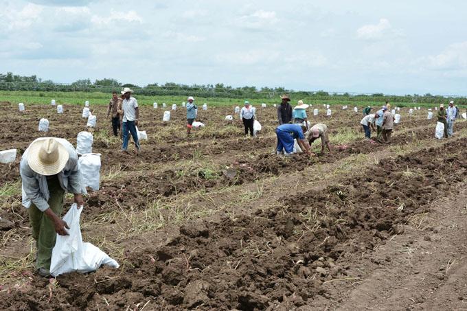Celebrarán hoy agropecuarios su día en Granma