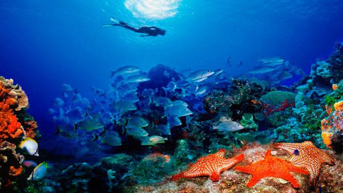 Arrecifes de coral en Cuba gozan de perfecta salud, asegura experta