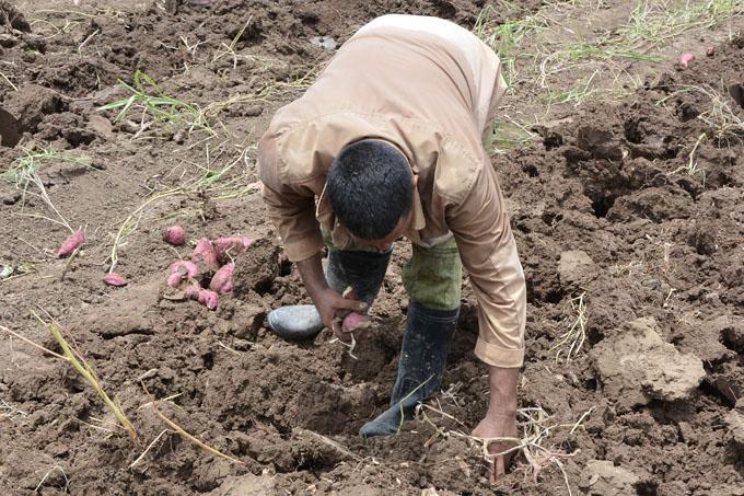 Realizan jornada por el Día del Trabajador Agropecuario en Granma