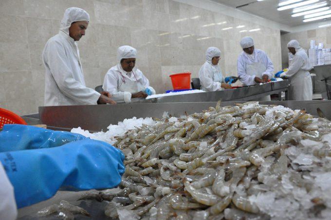 Colectivos pesqueros por sostener producciones en 2019