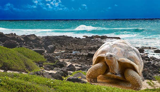 En vigor Plan de Limpieza Costera para conservar Galápagos(+video)