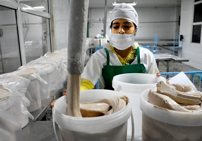Empresa de productos lácteos Bayamo: Bregar entre la tradición y la eficiencia