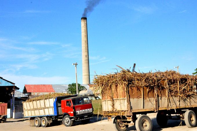 Aportarán más  azúcar al plan de Granma agroindustriales de Campechuela