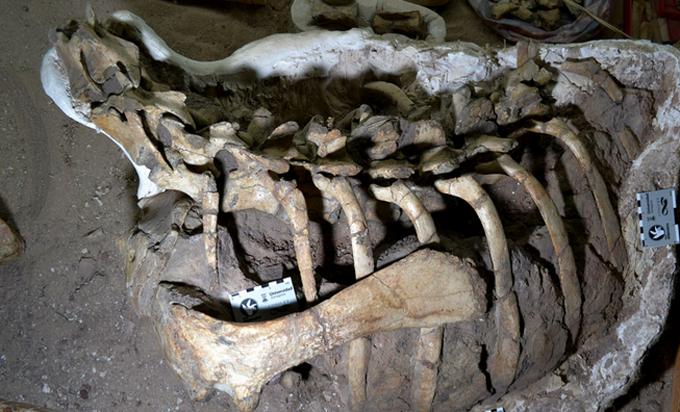 Descubren en Argentina una especie antes desconocida de dinosaurio bípedo