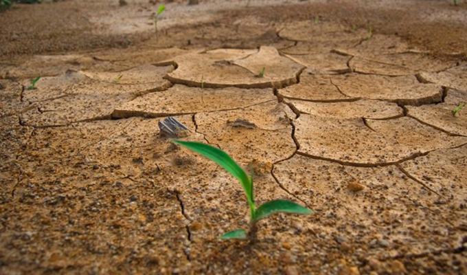 Cambios en patrones de lluvia afectarán a importantes cultivos