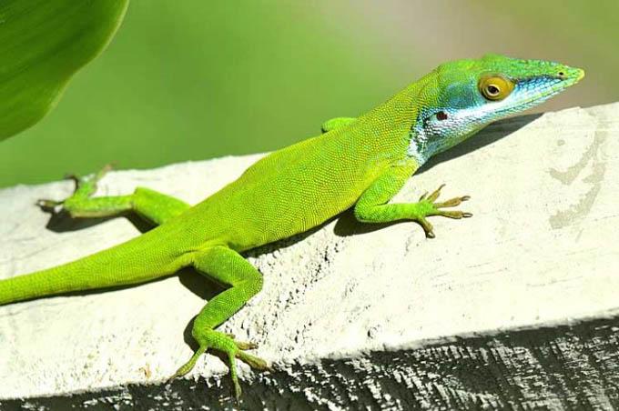Piden incluir en convención internacional especies endémicas cubanas