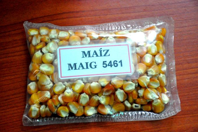 Estación de granos experimenta nuevas variedades de maíz y frijol (+audio)