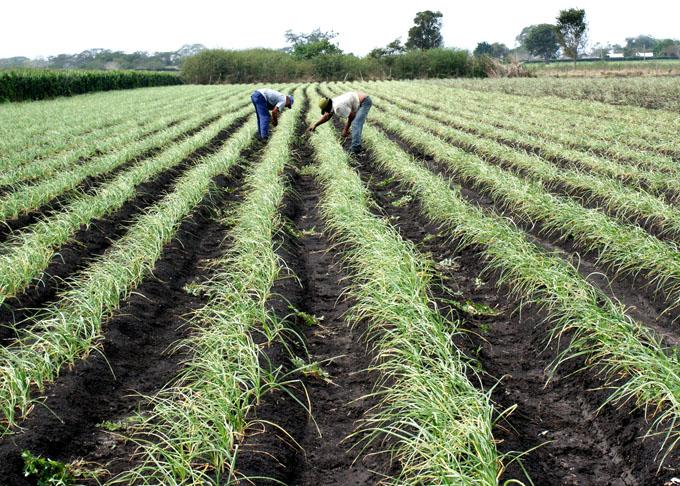 Demandan superiores resultados en producción de alimentos