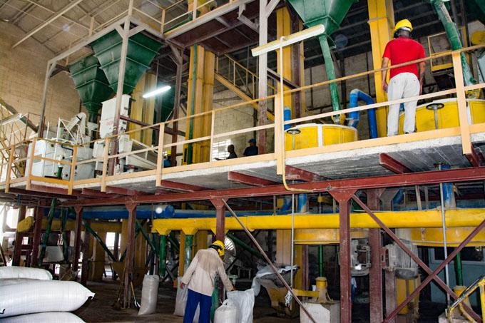 Se incrementará producción de harina de arroz