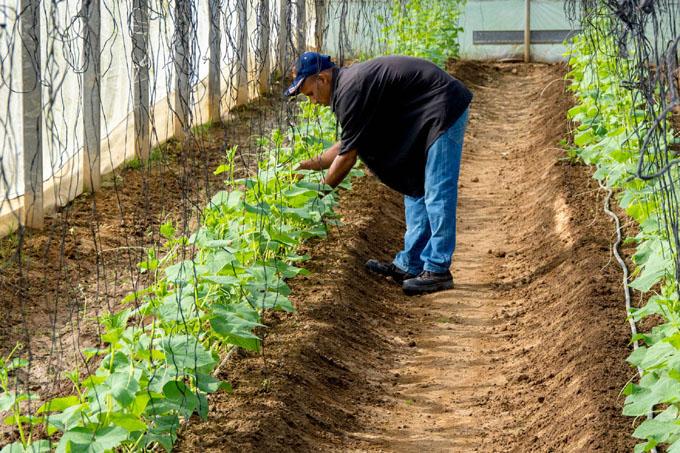 Recuperan Casas de Cultivo Protegido (+ fotos)