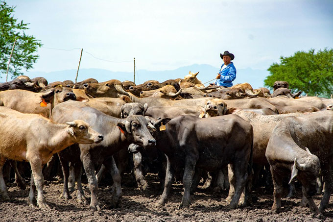 #GranmaEn26: Sobresale empresa agropecuaria Roberto Estévez Ruz (+ fotos)