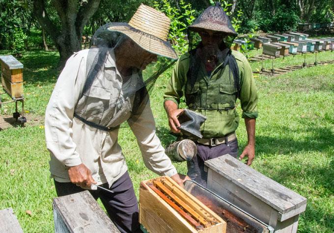 Los apicultores granmenses van por más