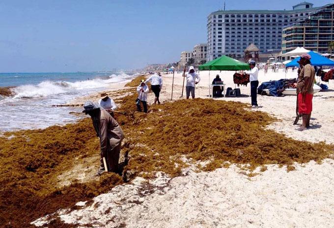 Naciones del Caribe por preservar sus playas