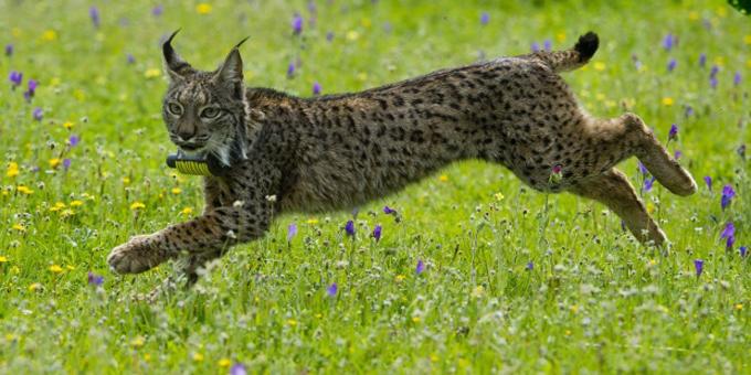 Alertan sobre peligros de extinción de casi 30 mil especies