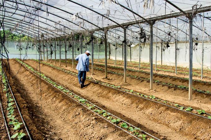 Llama dirigente cubano a ampliar producción de alimentos