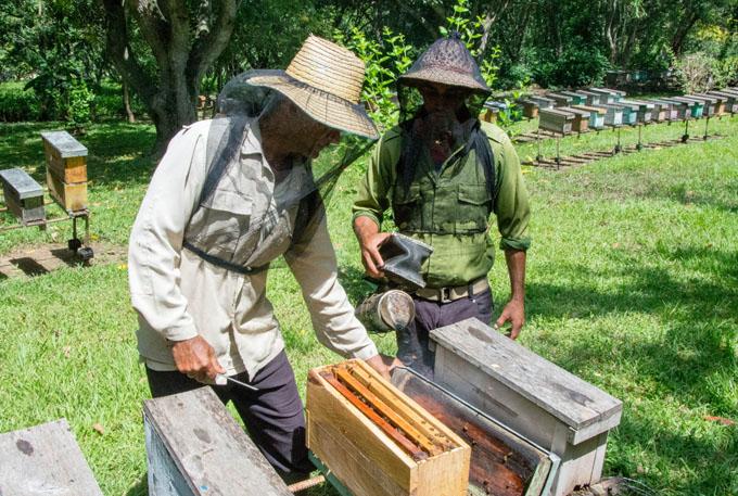 Ratifican apicultores compromiso en producción de miel de abejas