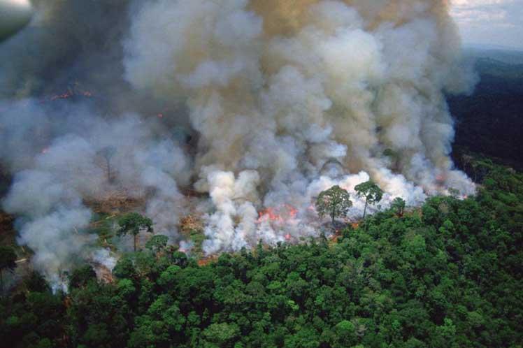 Un SOS que se abre camino entre las llamas en la Amazonia