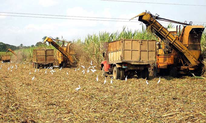 Debatirán en Cuba diversificación de agroindustria azucarera