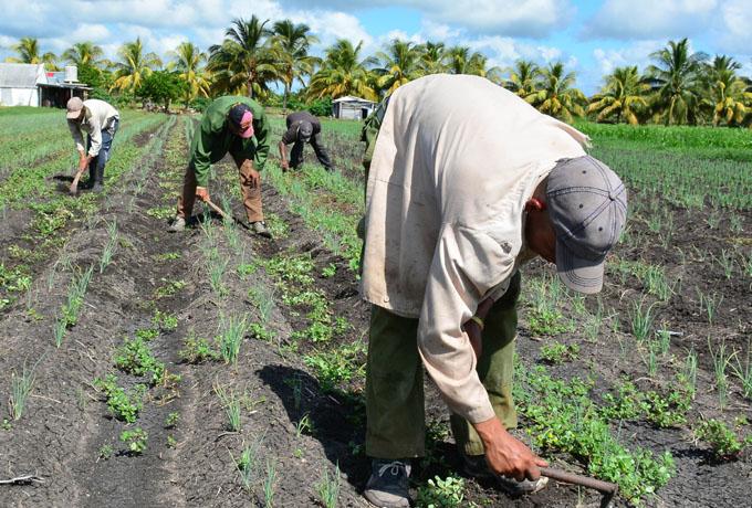 Empresa Agropecuaria Bayamo: Baluarte  en el desarrollo
