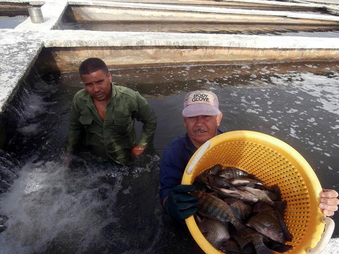 Alternativas en Pescagran para mantener producción de alimentos