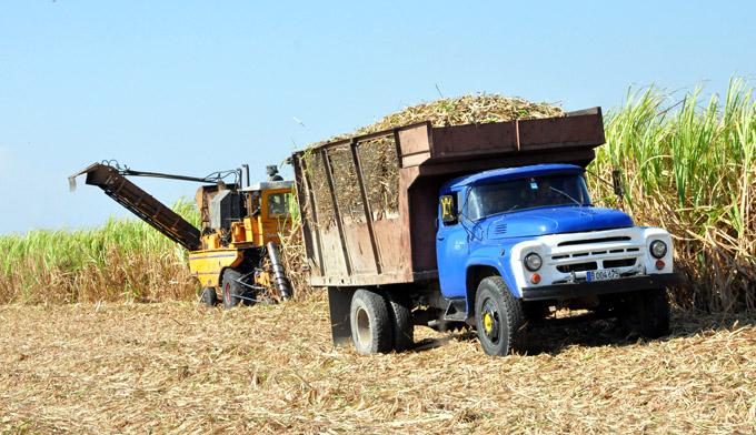 La contingencia no tomó por sorpresa a agropecuarios de Azcuba