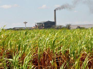 Azucareros comprometidos a crecer en producción cañera