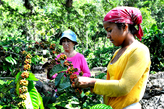 Empresa Batalla de Guisa: mayor eficiencia en la agricultura de montaña