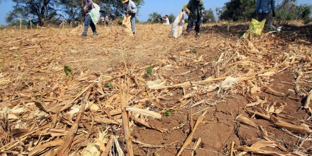 Decretan emergencia nacional por sequía en Panamá