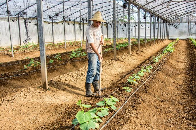 Agricultores exceden plan de siembras de frío
