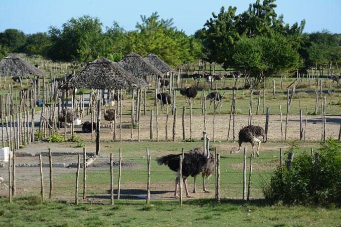 Muestra Pilón extraordinaria recuperación agrícola (+ fotos)