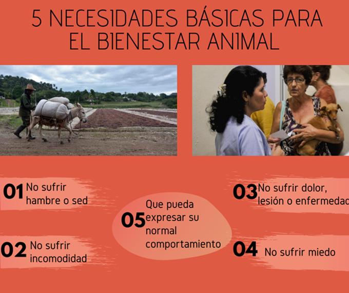 Cuba prepara ley de bienestar animal (+infografía)