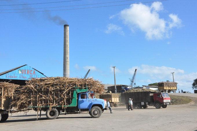 Trabajan azucareros para resarcir atrasos en producción del crudo
