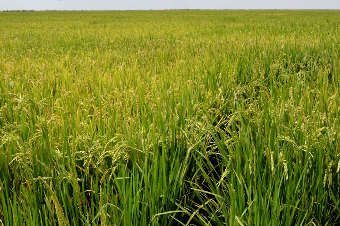 Proyecta crecer la agricultura en Granma