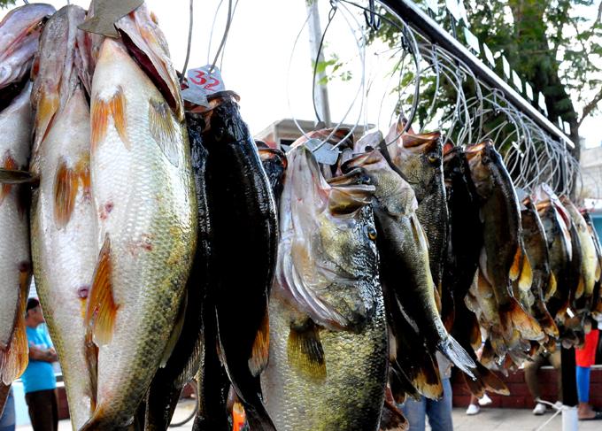 Animarán más de 40 concursantes Nacional de pesca de la trucha