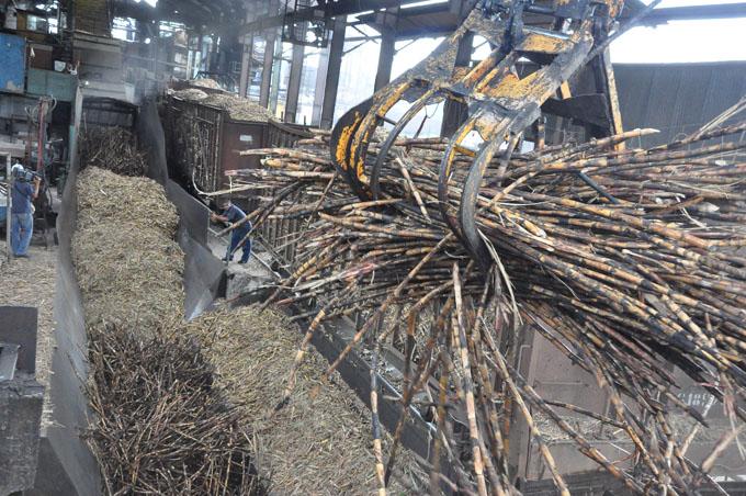 Incrementa eficiencia producción azucarera en Granma