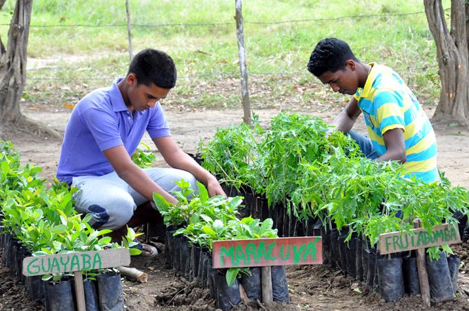 La juventud granmense en la producción de alimentos